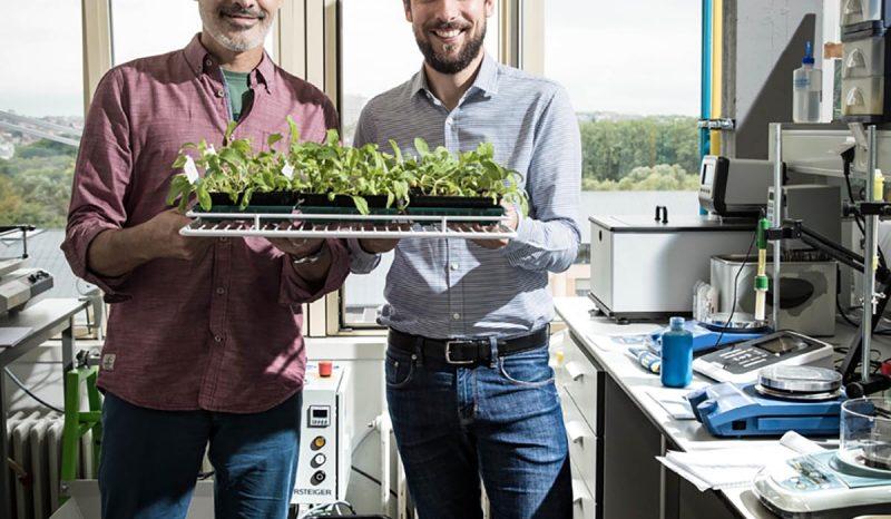 Bioproducts to improve crop yield – Fyteko 1